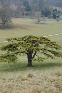 Tree stonor