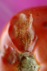 Moldy tomato