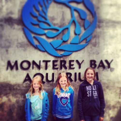 Monterey Bay Aquarium - visiting